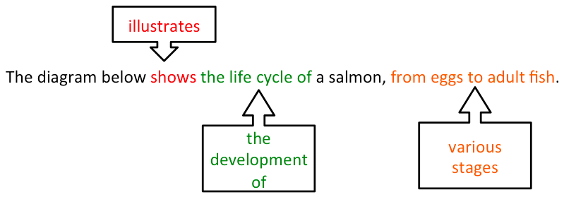 ielts-writing-task-1-process-life-cycle-of-a-salmon-1